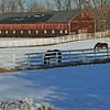 horses in snow_edited-1