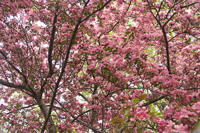 Spring in Lenox
