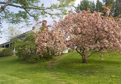 Springtime in Great Barrington