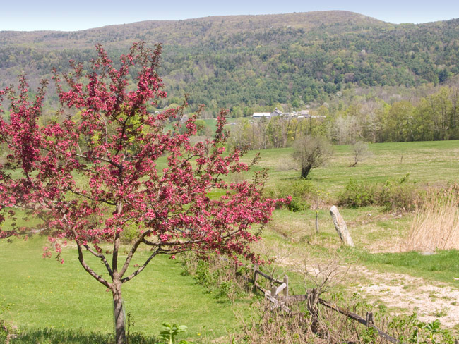 Spring in Tyringham, the Berkshires