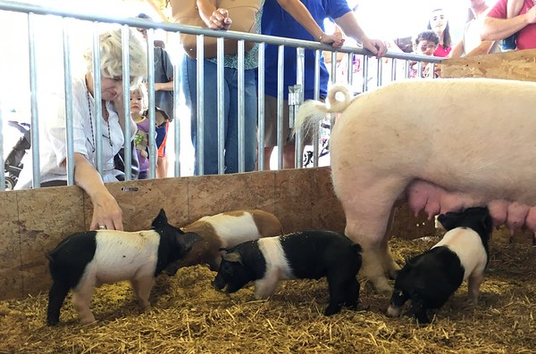 Photos: 71st Oley Valley Community Fair