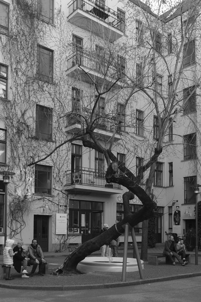A funny-shaped tree in Berlin