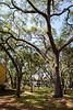 Park Wall & Trail-200213-010