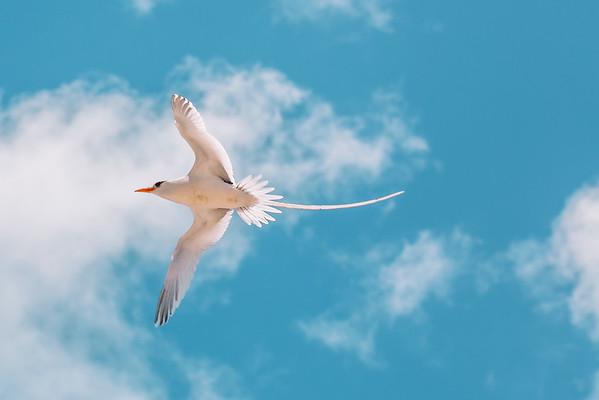 Bermuda Birds