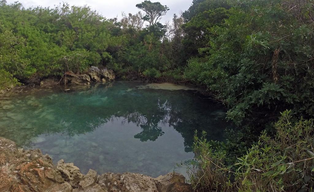 Tom Moore's Jungle - Blue Lagoon