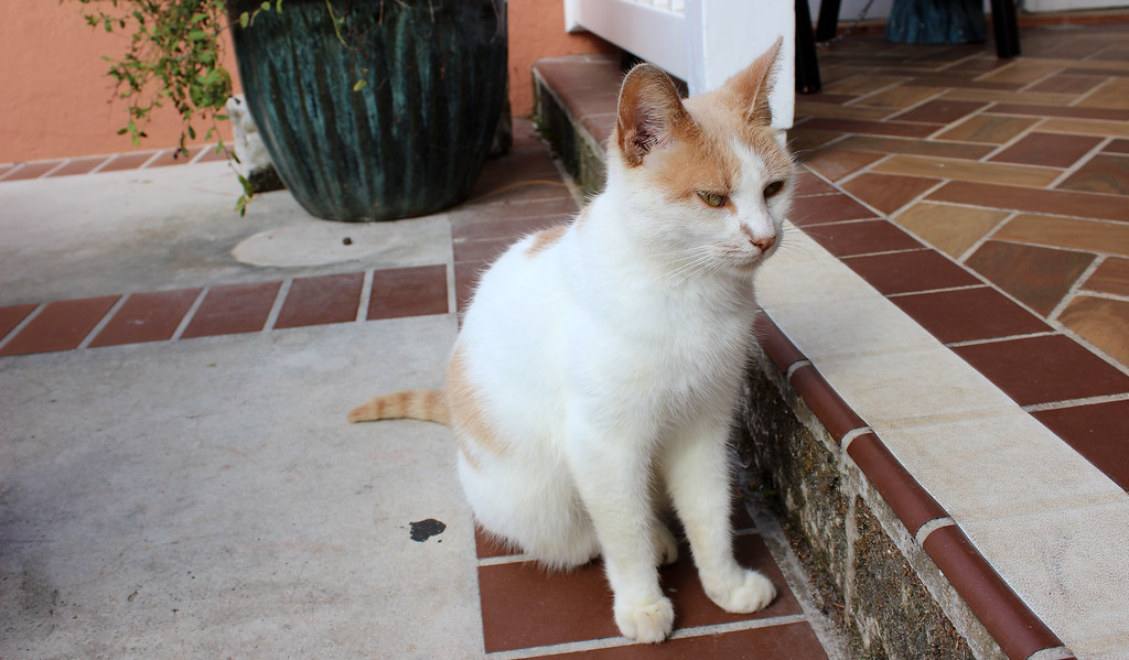 Bermuda facts: There are many feral cats that live around the island