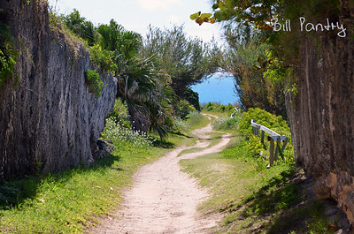 Along the Railway Trail in Hamilton Parish, Bermuda