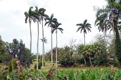 Along the Railway Trail, Paget, Bermuda