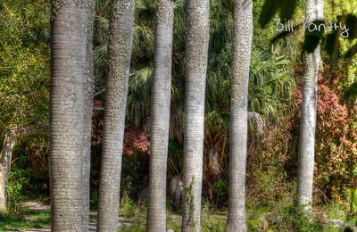 Royal Palms, Southlands Park, Warwick, Bermuda