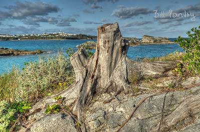 Coopers Island Nature Reserve, St Davids, St Georges, Bermuda