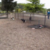 Charlotte and Rory's first visit to the dog park.  They are friends from puppy class.