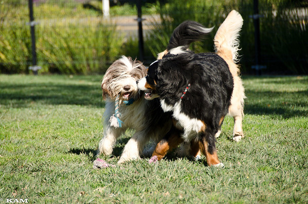 Dog Park Buddies - Summer 2011