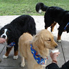 Frosty Paws time!  <br /> Photo credit: Laraine Jeffries