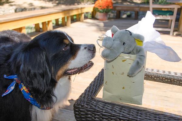 Zeus and Holly  Celebrate September Birthdays