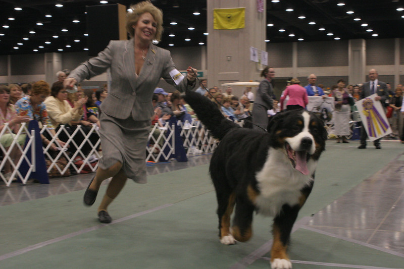 Best of Breed - CH Adesa I'm Stepping Out