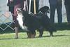 7-9 Veteran Dogs #11