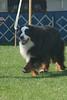 7-9 Vet Dog, #165
