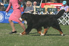 ** 1st Place ** 7-9 Vet Dogs #391 CH M & M Mountain's Brock of Gibraltar CD