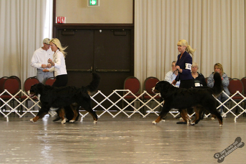 Best In Sweeps Final Competition  #63 Best Puppy, #83 Best Junior, #83 Best in Sweeps