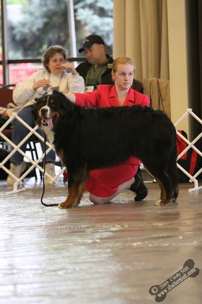 Final Look 9-12 Dog Sweeps