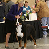 ****#63 First Place  Four Paw's Lasting Impression****