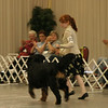 Best Junior Handler Competiton