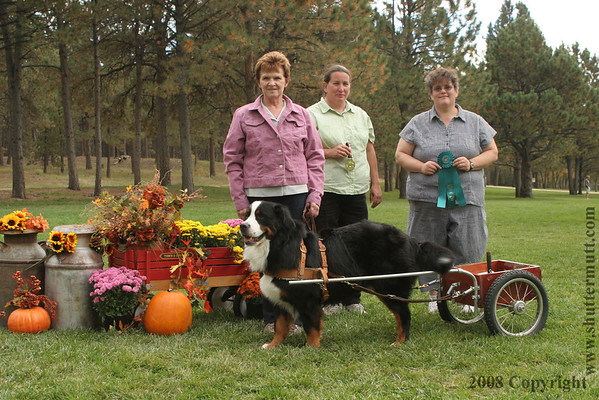 Bernese Mountain Dog Club of the Rockies (BMDCR)