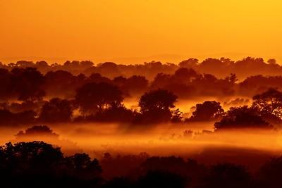 Woodland Sunrise
