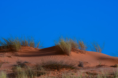 Sand Dune In Kgalagadi