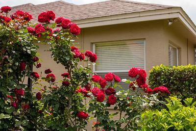 Barbara's Garden April 2009