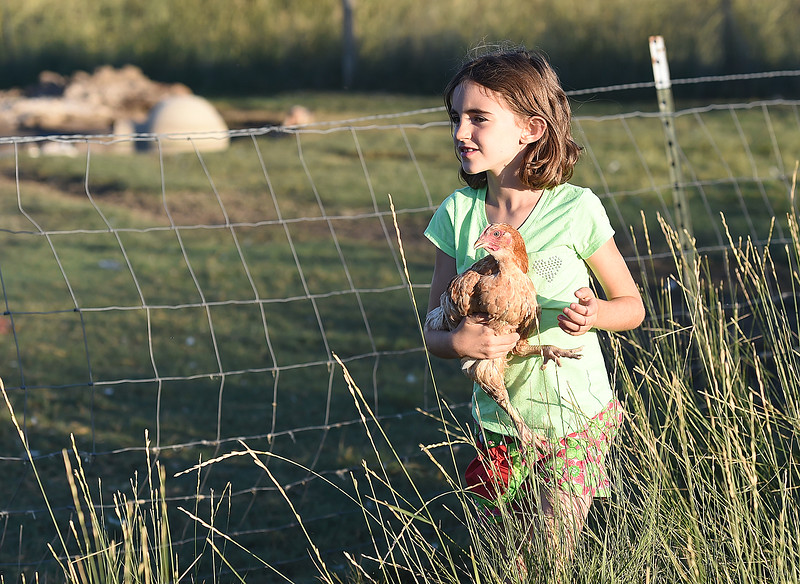 "Shannon Ramey, 8, walks around in the free range area holding one of her chickens Monday, Sept. 18, 2017, at her family farm, Long Shadow Farm in Berthoud. Animal rights activists recenlty posted a video saying they ""rescued"" three chickens from the farm. (Photo by Jenny Sparks/Loveland Reporter-Herald)"