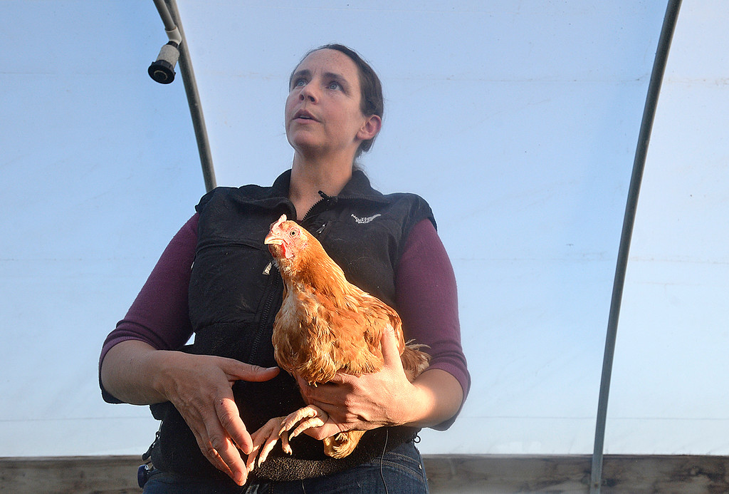""". Kristin Ramey holds one of her chickens Monday, Sept. 18, 2017, as she talks about how animal rights activists recenlty posted a video saying they \""""rescued\"""" three chickens from her family farm, Long Shadow Farm in Berthoud. (Photo by Jenny Sparks/Loveland Reporter-Herald)"""