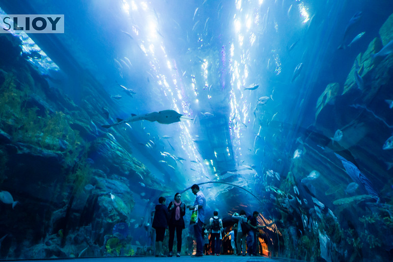 Under the Sea - Dubai Aquarium.