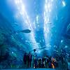 Under the Sea - Dubai Aquarium.