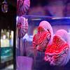Resident of the Dubai Aquarium.