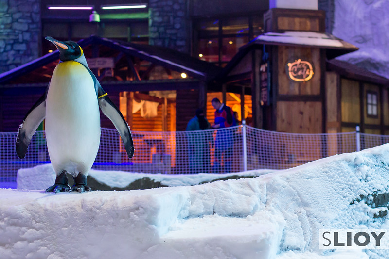 Playin' with Penguins - Ski Dubai.