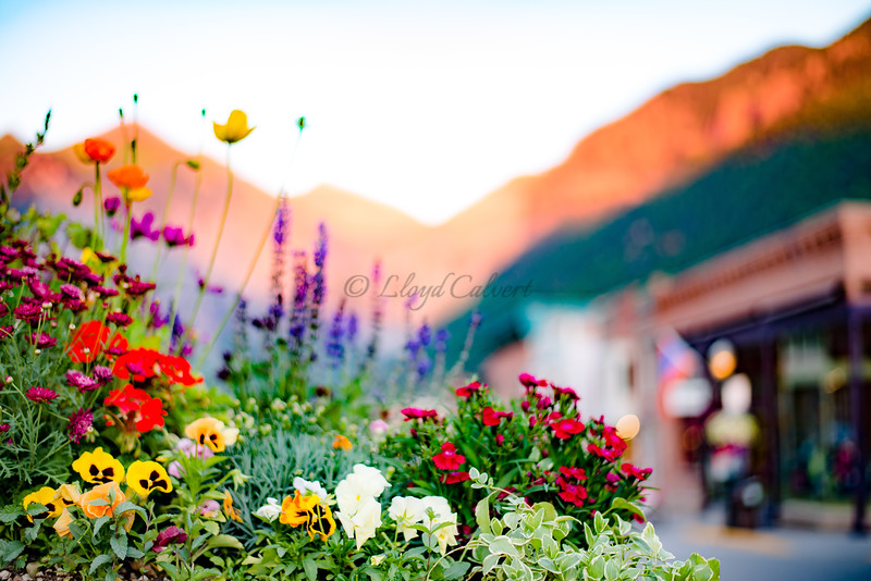Telluride Summertime Sunset