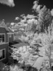 First try at infrared photography, from my balcony at Nevada City Cohousing