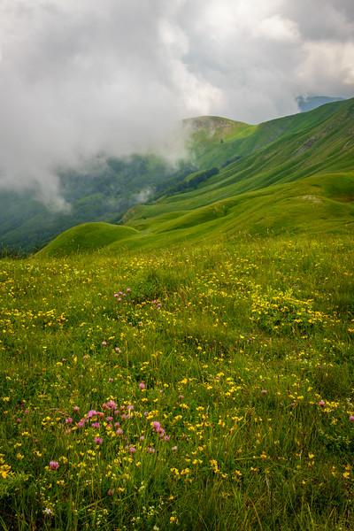 Wildflowers near Cutigliano
