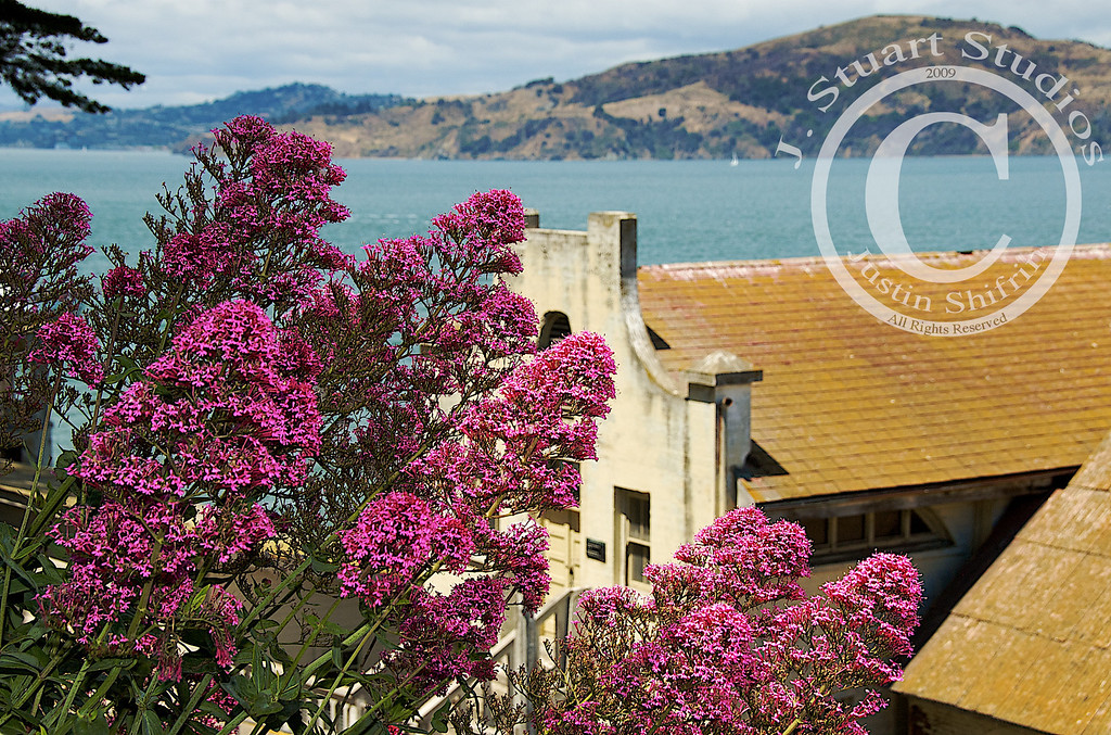 Pink Alcatraz<br /> <br /> The flowers blossomed on Alcatraz in the San Francisco bay.  The dilapidated classroom building for prisoners once stationed at the Federal penitentiary is juxtaposed against the vibrant pink spring flowers.