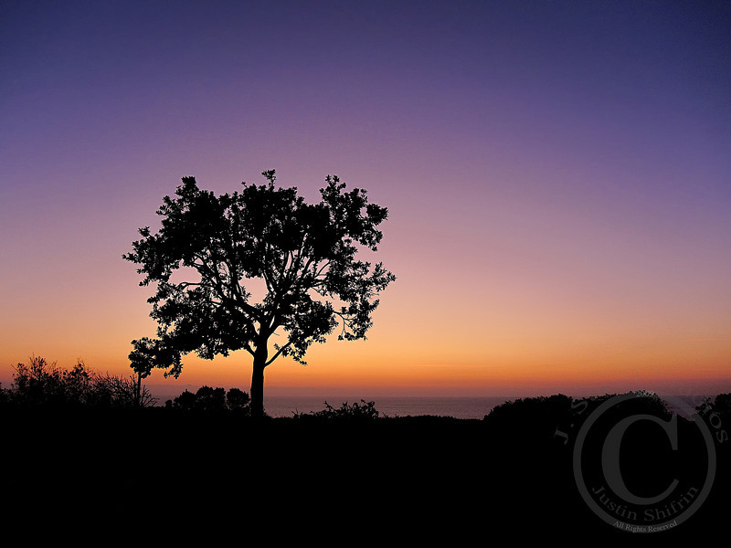 Pastel Perch<br /> <br /> A lone tree on the California coast stood out among the underbrush and the pastel sunset.