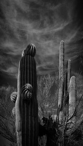 A Study in Shadows, Cactus and Clouds 5x10