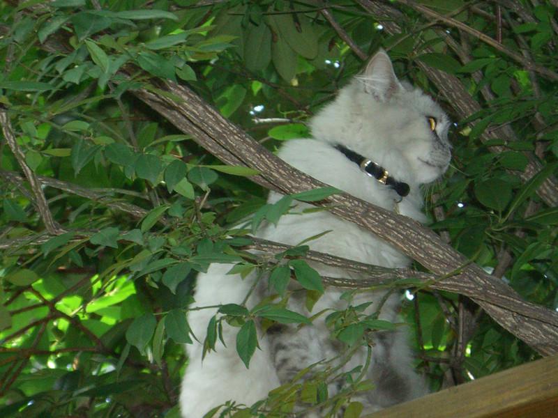 Me, a sweet cat?