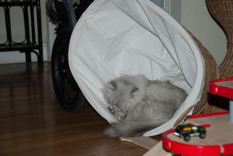 Cats like fresh laundry...