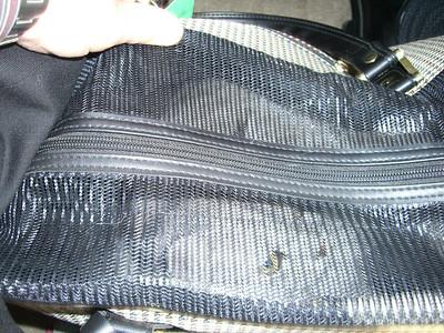 Hercie in his bag...