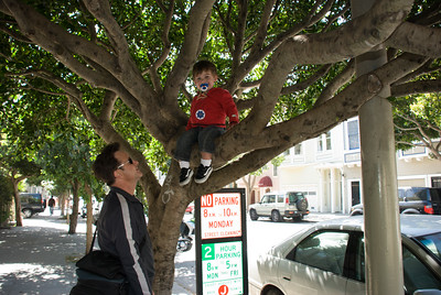 Haight Street Festival; Monkey in tree