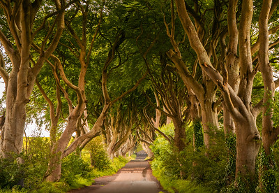 Tu 6/27  Northern Ireland.  The Dark Hedges, near Ballymoney RNI.  A half-mile long road, lined on both sides by intertwining beech trees, planted in the late 1700's.