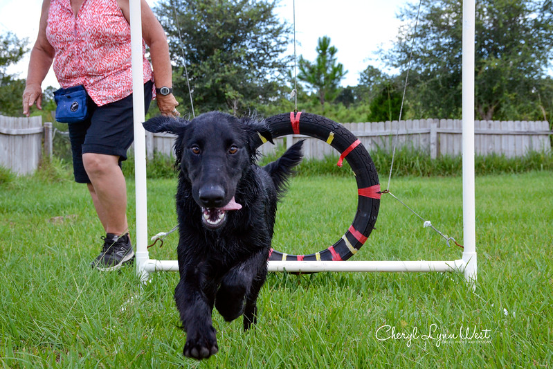 Cody, a Flat Coated Retriever puppy who also had some fun in the kiddie wading pool