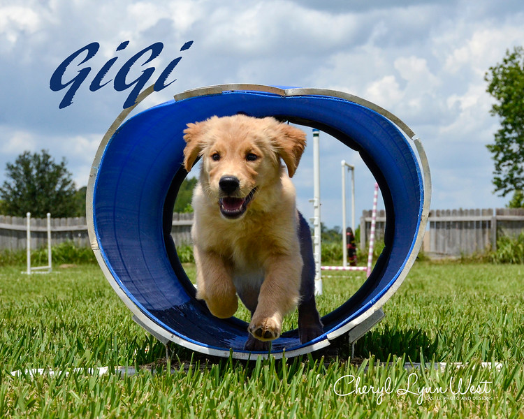 Gigi, owned by Laura Wright