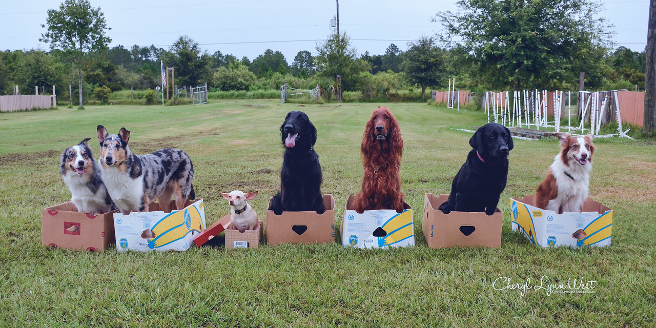 """Group """"Dog in a Box"""" sit - Tachi, Nim, Dobby, Linc, Tessa, Maggie and Amber"""